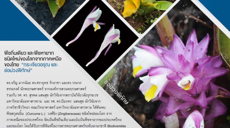 """""""กระเจียวอรุณและช่อม่วงพิทักษ์""""พืชถิ่นเดียวและพืชหายากชนิดใหม่ของโลกจากภาคเหนือของไทย"""